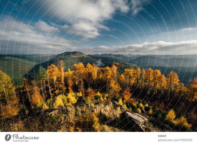 Herbstlich Natur Landschaft Pflanze Himmel Wolken Horizont Sonne Schönes Wetter Baum Gras Sträucher Wald Hügel Felsen Berge u. Gebirge Unendlichkeit Einsamkeit