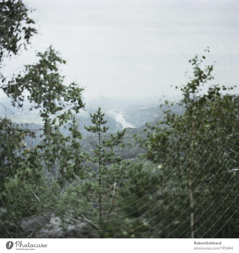 Wandern01 Baum Felsen Berge u. Gebirge Sächsische Schweiz Fluss Elbe Stein Sand Holz beobachten entdecken gehen träumen alt natürlich grau grün Kraft