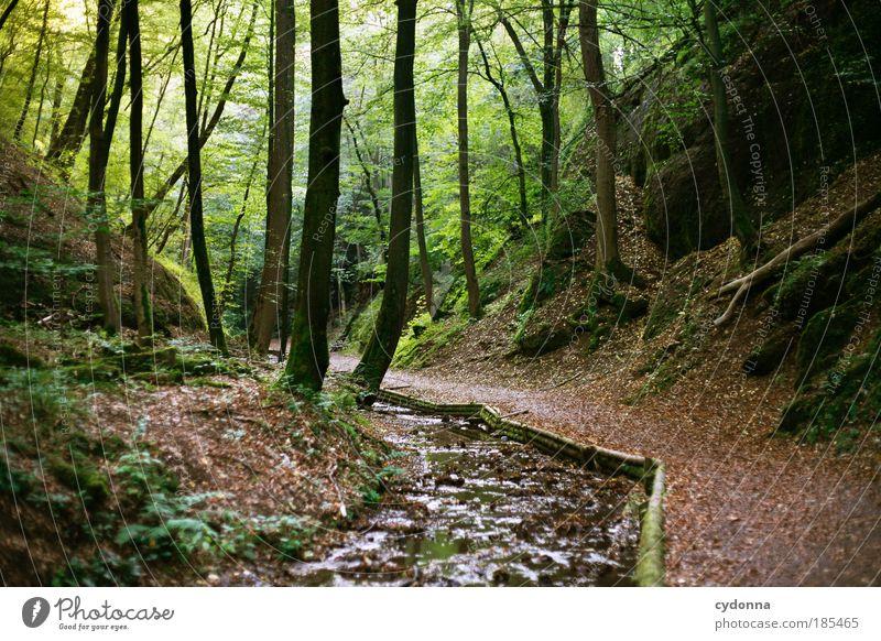 Leise rauschend Leben Wohlgefühl Zufriedenheit Erholung ruhig Ausflug Freiheit Umwelt Natur Landschaft Baum Grünpflanze Wald Bach Bewegung einzigartig Idylle