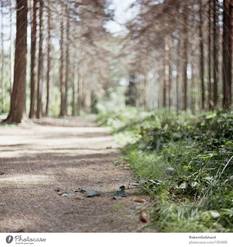 Wandern03 Natur grün schön Baum Pflanze ruhig Wald Erholung Freiheit Umwelt Gras Wege & Pfade Zufriedenheit Freizeit & Hobby Tourismus Ziel