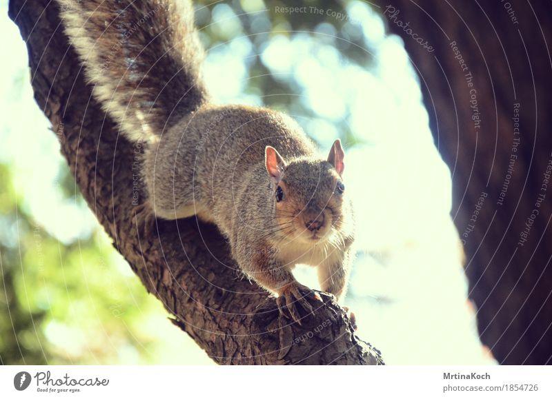 Hi! Natur Park Wald Tier Wildtier Zoo Streichelzoo 1 niedlich Eichhörnchen Nagetiere Neugier Überraschung Schüchternheit buschig Baum Streifenhörnchen weich