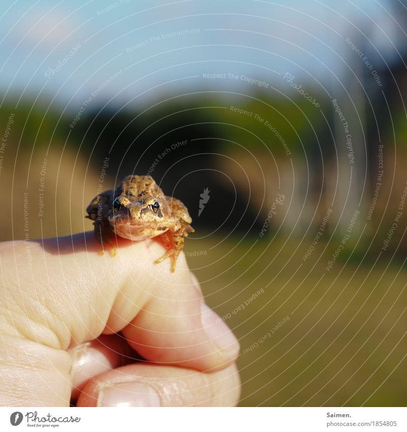 Tach! Umwelt Natur Tier Wildtier Frosch 1 beobachten sitzen Hand Finger Froschkönig Farbfoto Gedeckte Farben Außenaufnahme Nahaufnahme Textfreiraum rechts