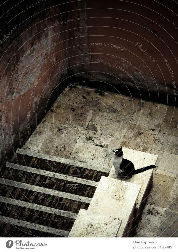 Kellerkatze Einsamkeit Tier Wand springen Mauer Katze Raum warten Wohnung sitzen Treppe ästhetisch trist kaputt beobachten Sehnsucht