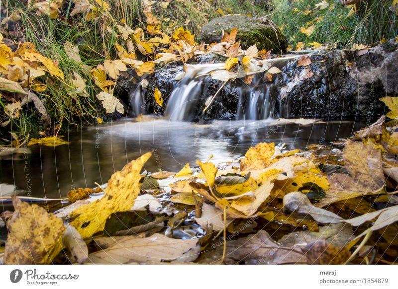 Nur noch runterspülen, dann ist er weg, der Herbst Natur Wasser Blatt Herbstlaub Bach Wasserfall gelb gold Müdigkeit Einsamkeit herbstlich Vergänglichkeit