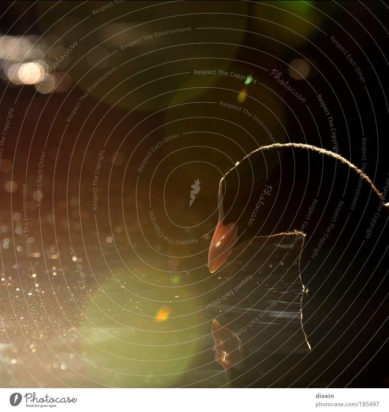 Fulica atra Umwelt Natur Tier Wasser Sonnenlicht Schönes Wetter Park Teich See Bach Fluss Wildtier Blässhuhn Vogel 1 nass natürlich Zufriedenheit Romantik