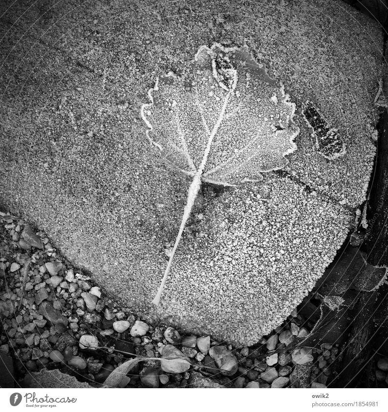Graue Jahreszeit Natur Pflanze Landschaft Einsamkeit Blatt ruhig Winter Umwelt kalt Stein liegen Eis Frost unten frieren geduldig