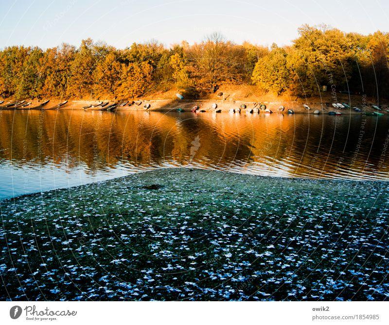 Parkbucht Natur Pflanze blau Wasser Baum Landschaft Blatt Ferne Strand Umwelt Herbst orange Horizont leuchten liegen Idylle