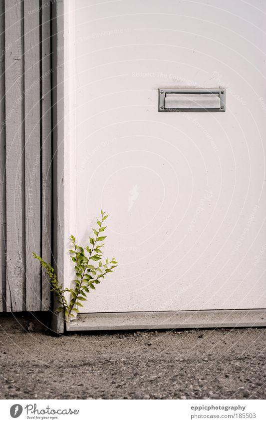 grün Pflanze grau Gebäude Tür einzigartig Bauwerk Briefkasten Willensstärke Entschlossenheit