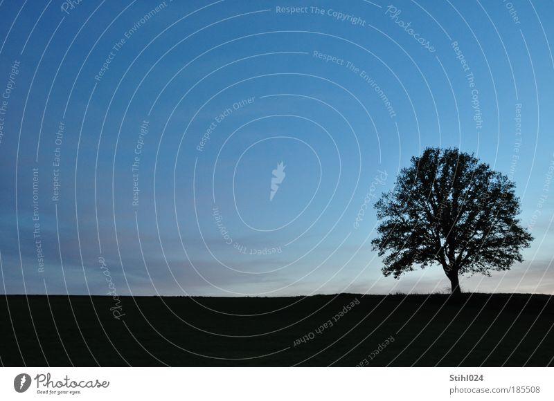 blaue Stunde ruhig Ferne Landschaft Wolkenloser Himmel Nachthimmel Horizont Sonnenaufgang Sonnenuntergang Winter Baum Hügel Linie ästhetisch schwarz Stimmung