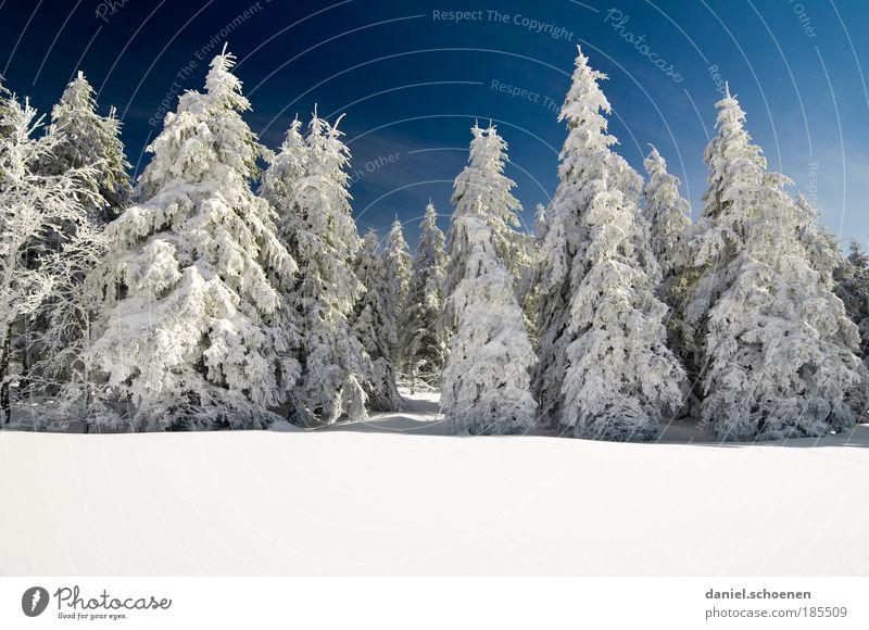 Textfreiraum unten Natur weiß Baum blau Winter Ferien & Urlaub & Reisen ruhig Wald Schnee Berge u. Gebirge Eis Wetter Frost Tourismus Textfreiraum rein