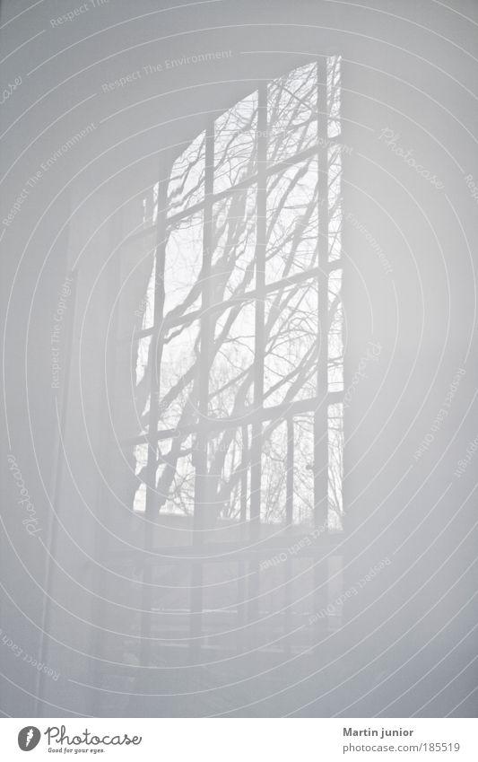 Schneeweißchen Umwelt Natur Pflanze Herbst Baum Haus Fenster Industriefenster Streifen träumen Häusliches Leben ästhetisch authentisch hell ruhig Weisheit
