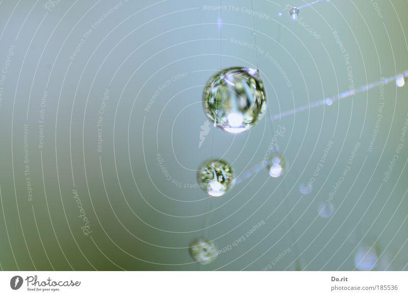 Tröpfsche für ti.Na Wasser Herbst Regen Wassertropfen Flüssigkeit Spinnennetz Netz Wetter Natur Wasserspiegelung Oberflächenspannung