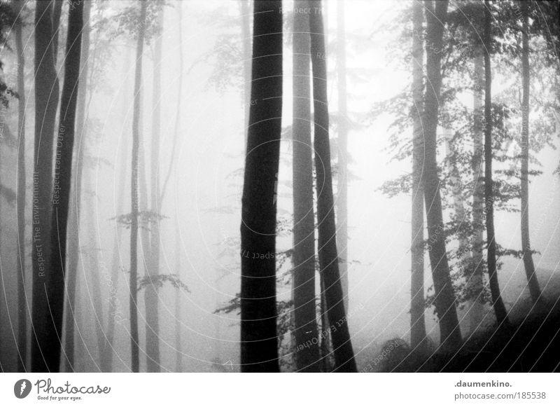 Allgegenwart. Natur Landschaft Erde Herbst Nebel Baum Wald alt beobachten berühren denken entdecken fallen ästhetisch bedrohlich dunkel Gefühle Stimmung