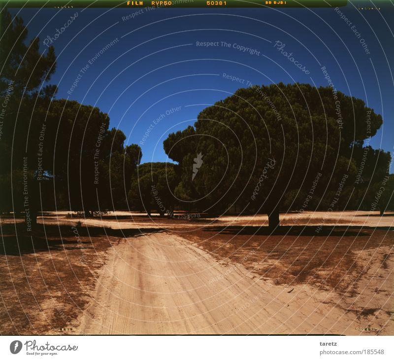 Weg nach vorn Baum blau Sommer Ferne Wege & Pfade Wärme Sand Natur Schönes Wetter Fernweh Portugal Süden Durst Vignettierung staubig Wolkenloser Himmel