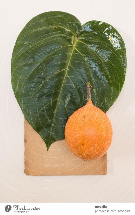 Herbarium Frucht Natur Pflanze Blatt exotisch ästhetisch einzigartig natürlich braun grün orange Bildung Design Kreativität retro Wissenschaften Botanik