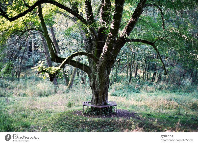 Verweile doch! Natur Baum ruhig Wald Leben Erholung Gras Freiheit träumen Landschaft Zufriedenheit wandern Umwelt Zeit Ausflug ästhetisch