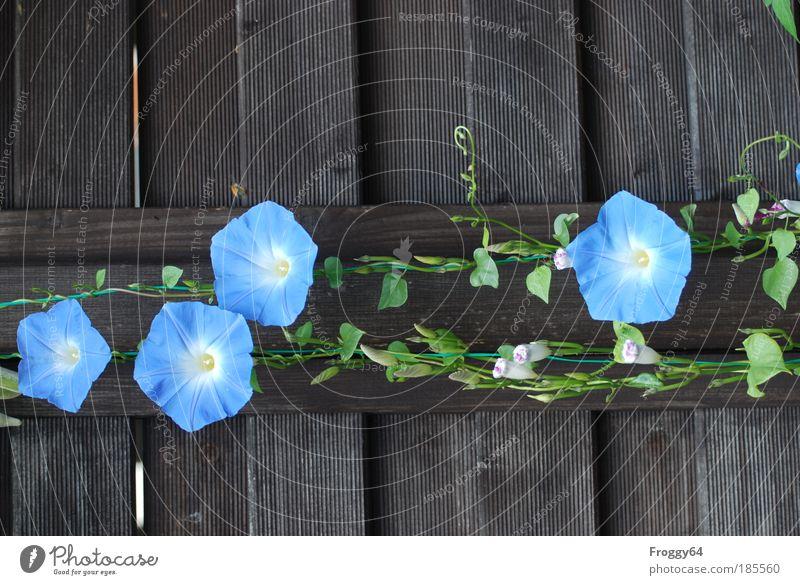Sommer Pflanze Blume Blüte Fröhlichkeit Zufriedenheit Lebensfreude Begeisterung Umwelt Umweltschutz mehrfarbig Außenaufnahme Textfreiraum oben