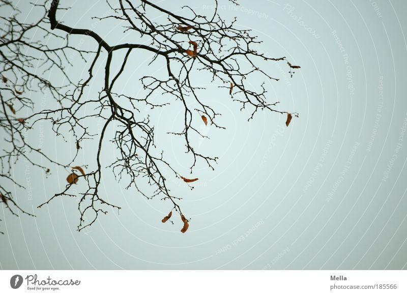 Völlig vogelfrei Umwelt Natur Pflanze Himmel Herbst Winter Blatt verblüht dehydrieren dunkel trist grau Stimmung Traurigkeit Trauer Tod ruhig Verfall