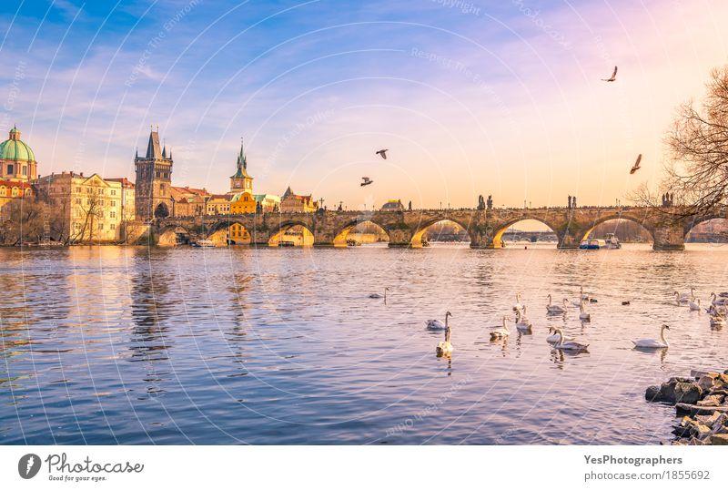 Prag Stadt und Vltava (Moldau) bei Sonnenuntergang Natur Ferien & Urlaub & Reisen blau Freude Architektur Gebäude Vogel Tourismus Ausflug gold Europa Kultur
