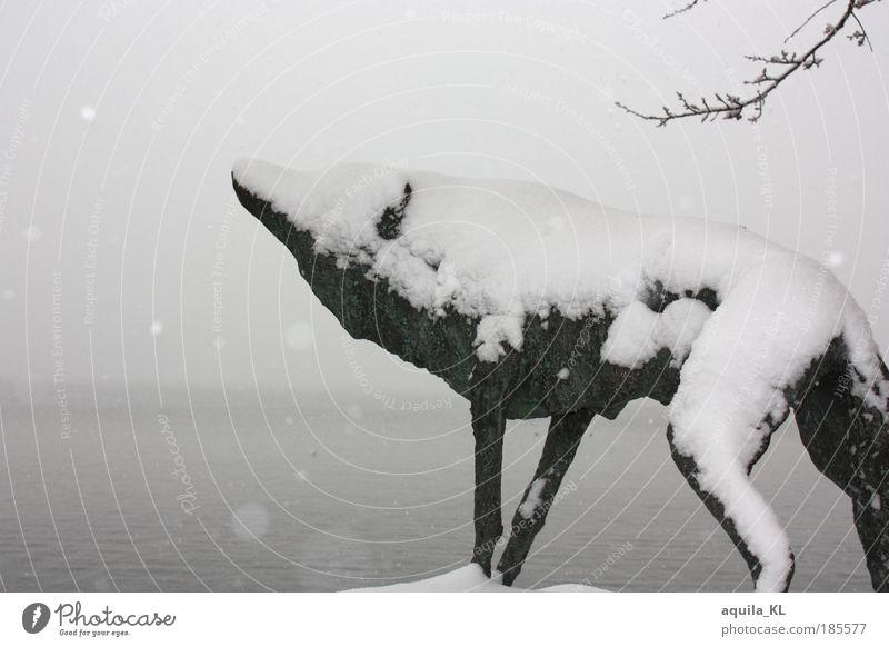 Wolf im Schaafspelz Winter Tier kalt Schnee Schneefall Mecklenburg-Vorpommern weich Fell Jagd Wahrzeichen Figur Respekt Schüchternheit Stolz Liebeskummer Wolf