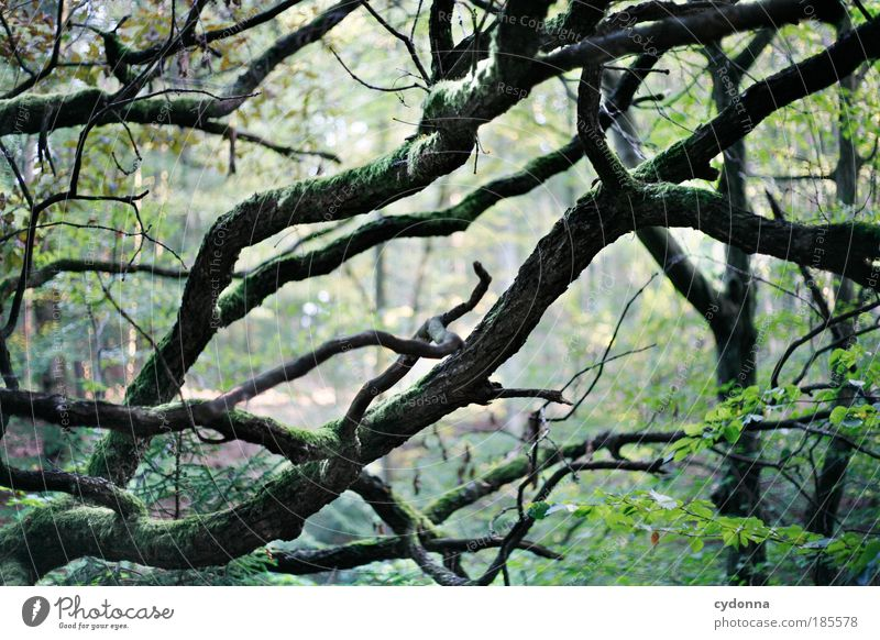 Geäst Natur schön Baum ruhig Wald Erholung Leben Freiheit Umwelt Wege & Pfade Zeit ästhetisch Wachstum Netzwerk einzigartig Vergänglichkeit