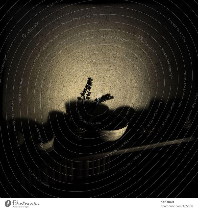 schatten. an der wand. Pflanze ruhig Einsamkeit Ferne dunkel Wand Traurigkeit Stimmung Raum Buch Wohnung Design verrückt Lifestyle Trauer ästhetisch