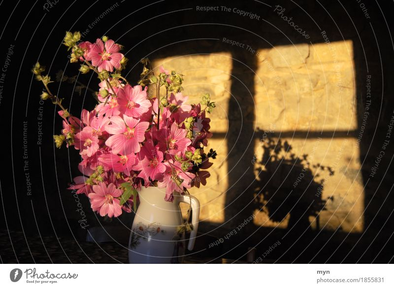 Vorhang auf Sommer Blume Erholung Fenster Wärme Blüte Frühling Feste & Feiern Stimmung rosa Wohnung Häusliches Leben Zufriedenheit Dekoration & Verzierung