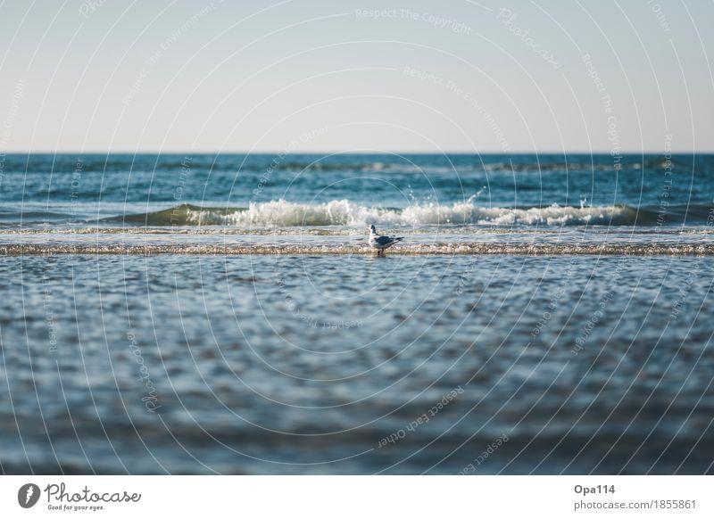 Wellenritt Natur blau Sommer Tier Strand Umwelt Küste Vogel Wetter Wildtier Schönes Wetter Bucht