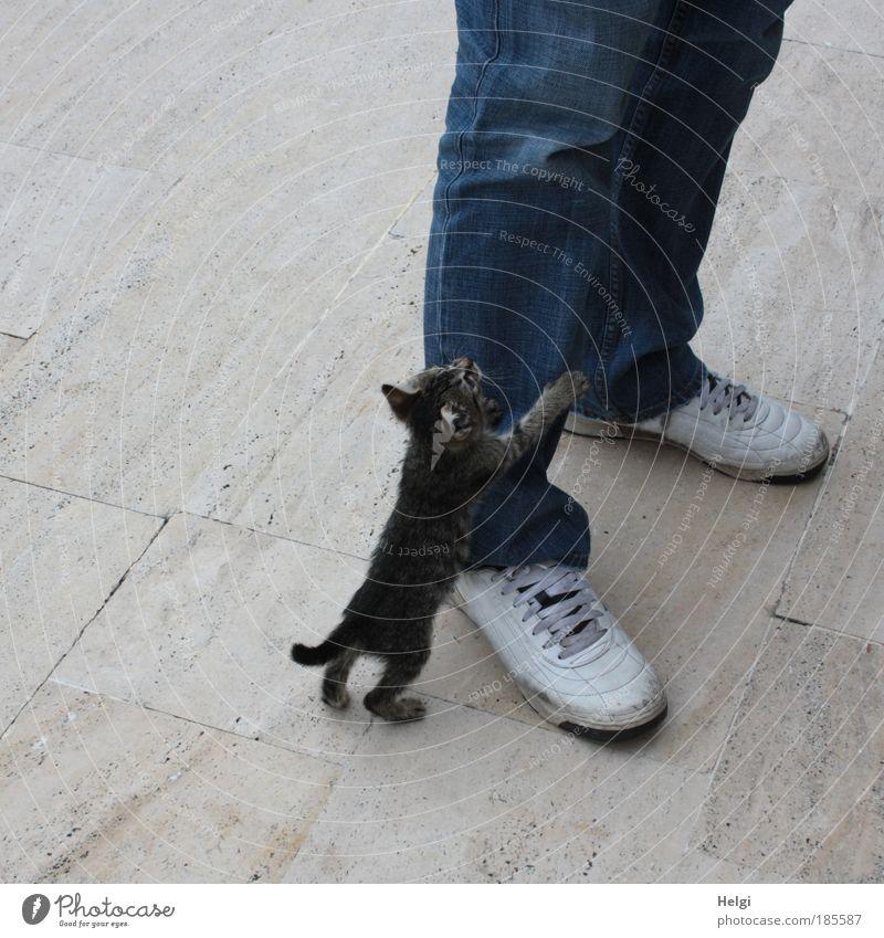 Kontakte knüpfen... Katze Mensch blau Tier Erwachsene grau klein Tierjunges Stein Beine Fuß Schuhe groß maskulin stehen Bekleidung