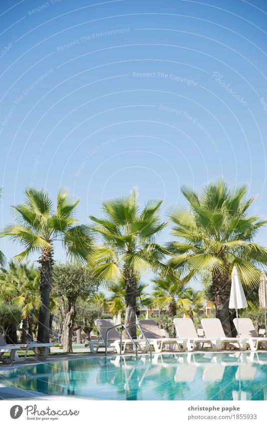 Ferienparadies Wohlgefühl Zufriedenheit Erholung ruhig Schwimmbad Ferien & Urlaub & Reisen Tourismus Sommer Sommerurlaub Sonne Sonnenbad Pflanze Baum Palme