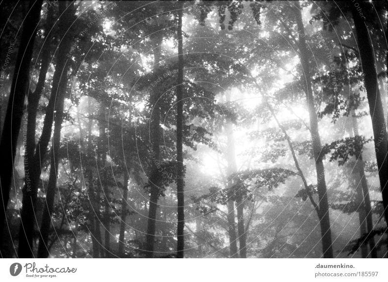 teil des gesamten Natur Landschaft Erde Herbst Nebel Baum Wald alt beobachten berühren Denken entdecken fallen ästhetisch bedrohlich dunkel Gefühle Stimmung