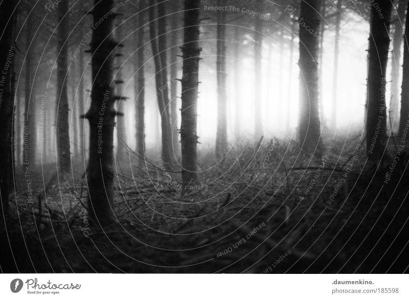 dualität Natur alt Baum Einsamkeit Wald Leben dunkel Herbst Gefühle Denken Landschaft Stimmung Angst Nebel Erde ästhetisch