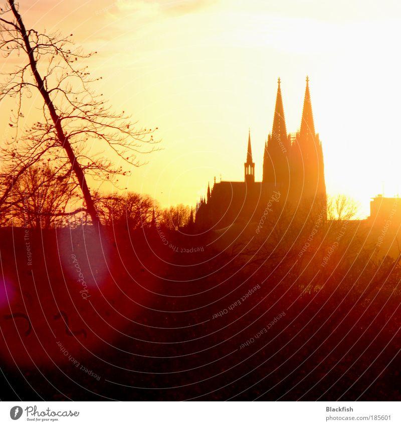 DOMinierendes Licht alt gelb Herbst braun Religion & Glaube gold Sonnenuntergang Kirche Ast Spitze Gegenlicht Köln Wahrzeichen Schönes Wetter Silhouette Dom