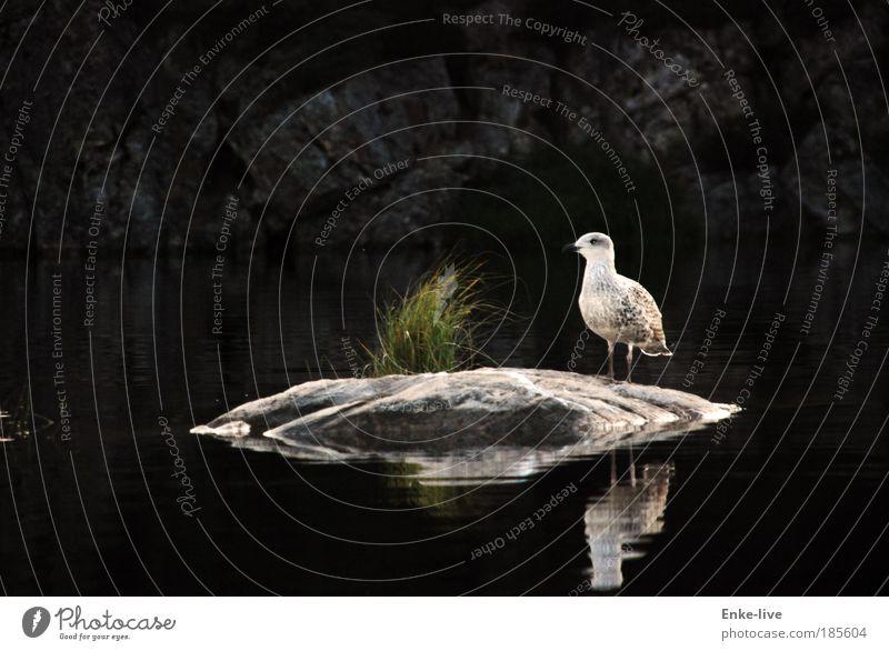 skogtun bird Natur Wasser schön Einsamkeit Tier Erholung Landschaft Umwelt Gras See Vogel elegant Abenteuer Felsen Insel ästhetisch