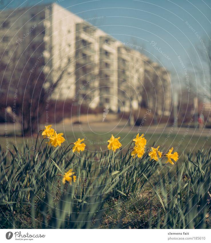 Ostern in der Stadt Natur alt Himmel grün blau Pflanze gelb Wiese Gras Garten Glück Park Wärme Umwelt Hochhaus