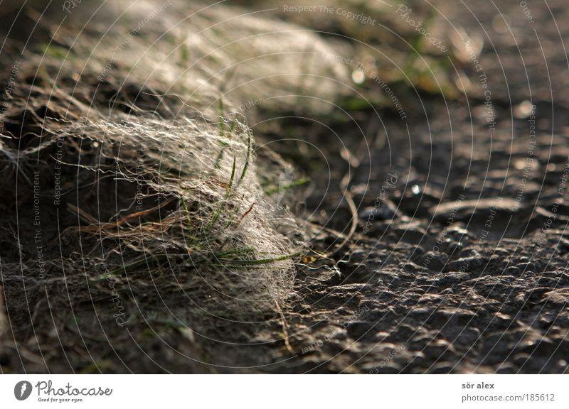 Vom Winde verweht Natur weiß grün Pflanze ruhig Tier Stil Gras grau Wege & Pfade Stimmung Beleuchtung Wind liegen Asphalt Gelassenheit