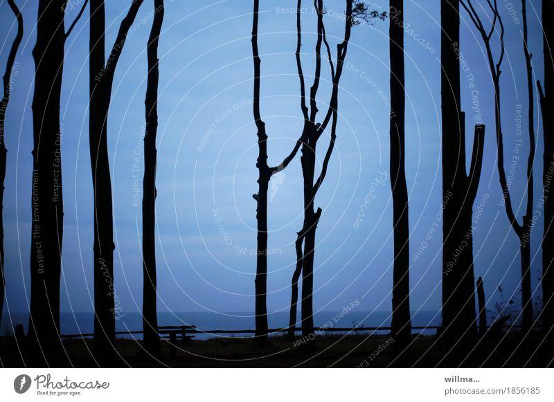 Ostseeküste mit Buchenstämmen vom Gespensterwald Silhouette Küste blau schwarz Bank Meer dunkel Abend Bäume hochstämmig Astgabel Natur Landschaft graphisch