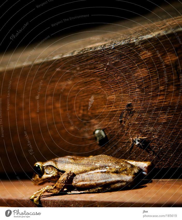 Ein Frosch Ferien & Urlaub & Reisen Sommer Tier Ferne Holz Freiheit braun Arbeit & Erwerbstätigkeit außergewöhnlich Wildtier Lebensmittel warten maskulin