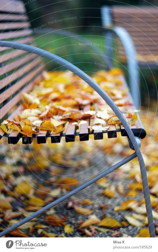 Zeit zum Ausruhen! Erholung ruhig Ferien & Urlaub & Reisen Ausflug Umwelt Natur Herbst Schönes Wetter Baum Garten Park Terrasse schön Jahreszeiten Bank Parkbank