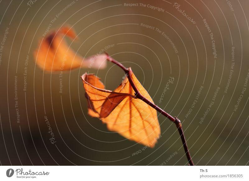Blatt Natur Pflanze Herbst Bewegung verblüht ästhetisch authentisch einfach elegant natürlich braun orange Gelassenheit geduldig ruhig einzigartig schön