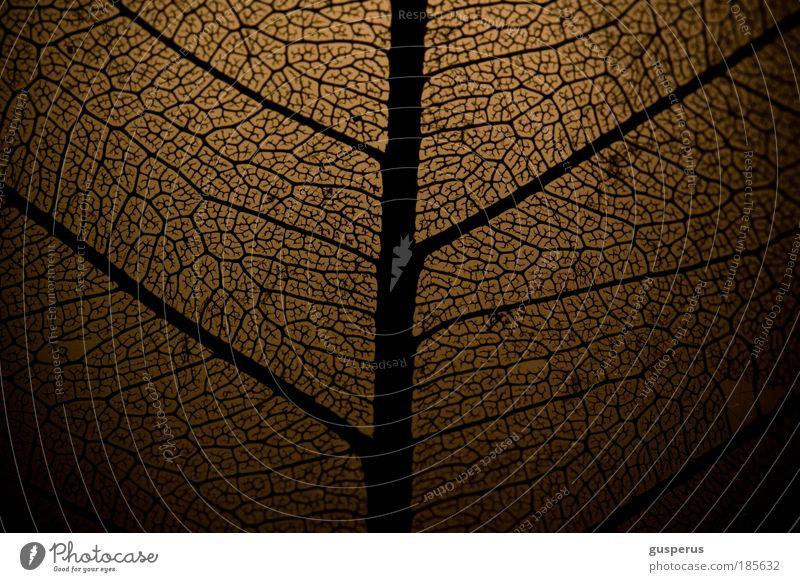 Chaos theory Umwelt Natur Pflanze Herbst Blatt dünn Unendlichkeit braun schwarz schön Armut ästhetisch bizarr chaotisch entdecken Erholung Netzwerk Stil