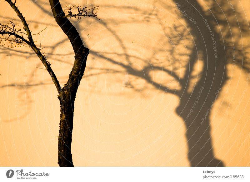 shadow on the wall Herbst Baum Sträucher Stimmung Schatten Silhouette Wandel & Veränderung Täuschung Wärme Farbfoto Gedeckte Farben Außenaufnahme Abend