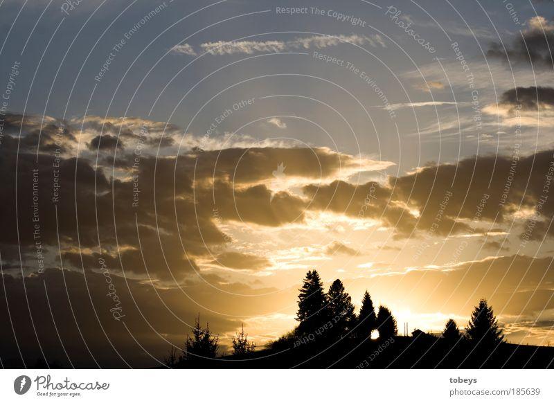 Lichtung Natur Himmel Wolken Wald Hügel Berge u. Gebirge Stimmung Abenddämmerung leuchten Beleuchtung Wärme Wäldchen Tanne Allgäu Farbfoto Außenaufnahme