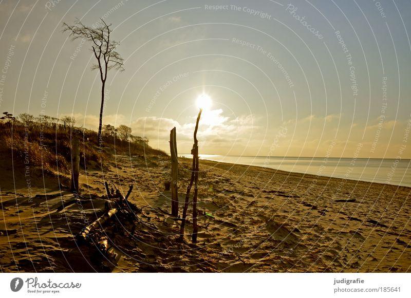 Weststrand Umwelt Natur Landschaft Sand Wasser Himmel Sonne Baum Küste Strand Ostsee Meer natürlich Wärme Stimmung Einsamkeit Erholung Ferien & Urlaub & Reisen