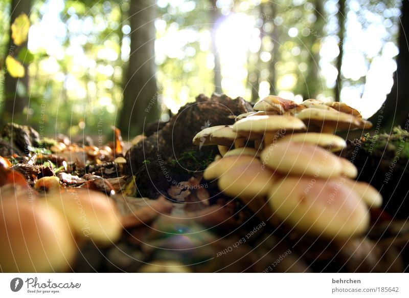 pilzsuppe Himmel Natur Baum Pflanze Blatt Wald Umwelt Herbst braun Erde Zufriedenheit Schönes Wetter Spaziergang Sträucher Baumstamm Suppe