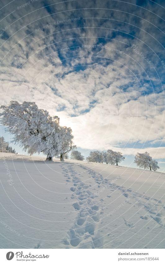 Hochkantwinter Ferien & Urlaub & Reisen Winter Schnee Winterurlaub wandern Himmel Sonne Eis Frost Baum hell blau weiß Horizont ruhig Wege & Pfade Ferne Spuren