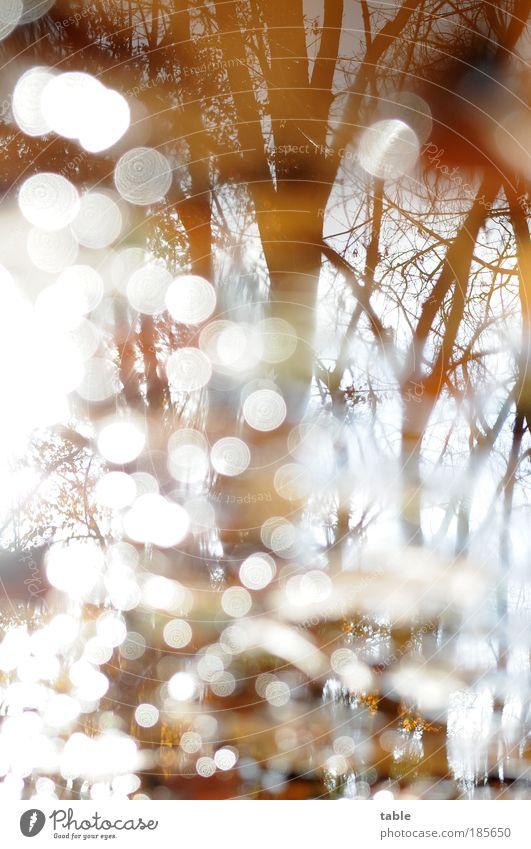Herbstspaziergang Natur Wasser Himmel Baum Sonne Pflanze Winter ruhig Wald Landschaft Luft Umwelt Wandel & Veränderung rein Ast