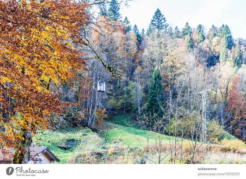 seilbahn Natur Landschaft Herbst Wald Alpen Seilbahn fahren Ferien & Urlaub & Reisen Partnachklamm Garmisch-Partenkirchen Farbfoto Außenaufnahme Menschenleer