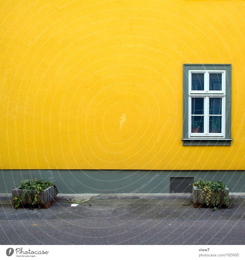 Textfreiraum schön Pflanze Haus gelb Ferne Straße Farbe Erholung Herbst Wand Fenster Freiheit Mauer Wege & Pfade Fassade frisch