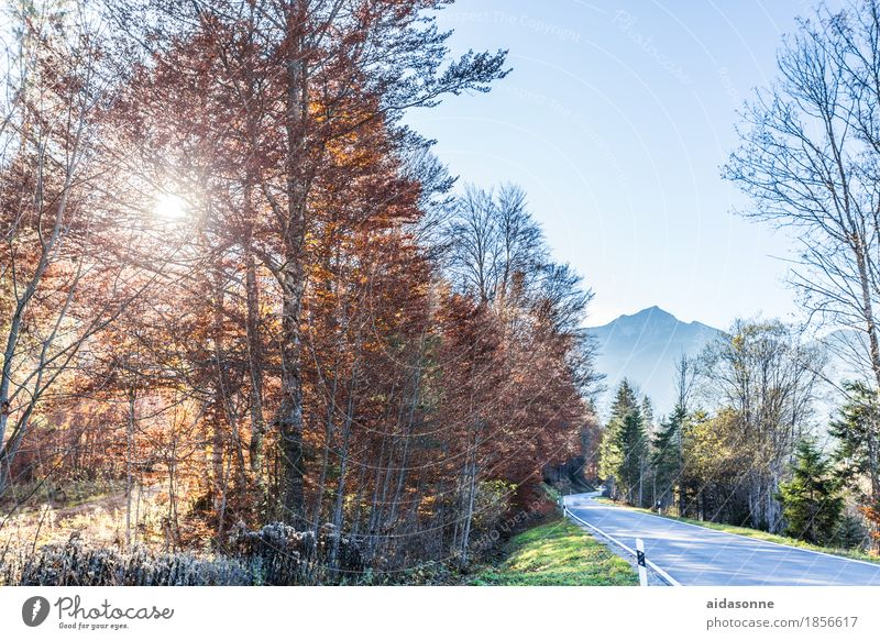 bayern Landschaft Wald Berge u. Gebirge Alpen Verkehrswege Straße Zufriedenheit Romantik friedlich Herbst Farbfoto Außenaufnahme Menschenleer Tag Sonnenlicht